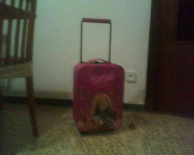 Trolley barbie
