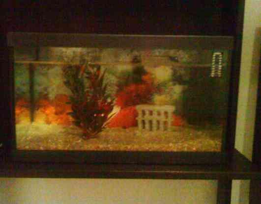 Peces y adornos para acuario