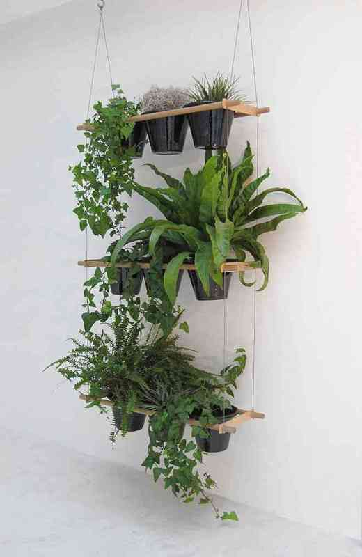 Adopto plantas