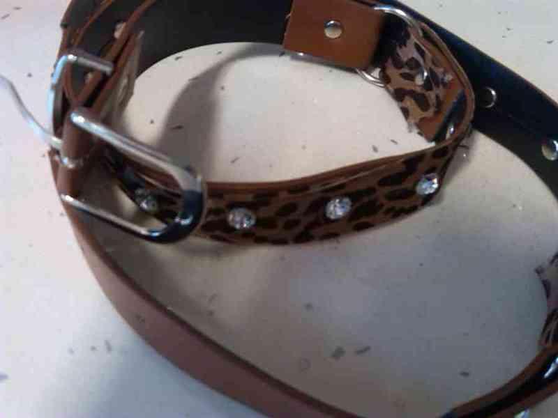 Cinturón leopardo.