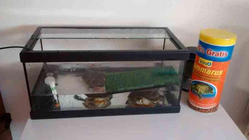 2 tortugas+tortuguera+depuradora