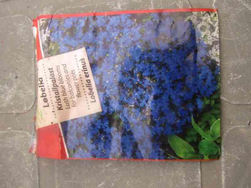 Semillas de flor.sli 24,yasmin,dankito