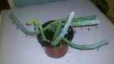 planta...solosiembra