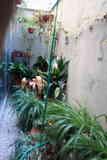 VARIAS PLANTAS