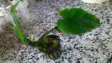 planta para acuario