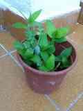 tiestos  para plantas