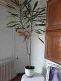 regalo planta
