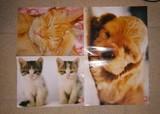 regalo pósters de animales
