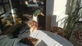 Pato disecado