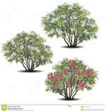 Busco árboles o arbustos o plantas de exterior para centro de formación de jóvenes marginados