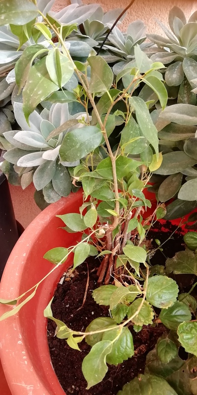Planta natural 1
