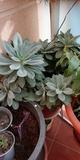 Planta natural 2