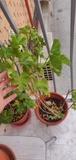 Regalo plantas