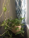 Regalo planta con maceta