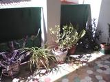 Plantes / Plantas